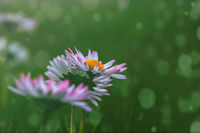 no name ( ID=2142413 ); comments:4