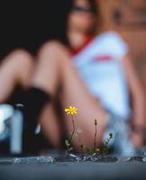 Красотата в малките неща; comments:5