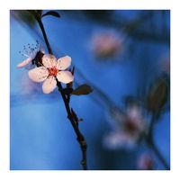 春の俳句 (Пролетно хайку); comments:10