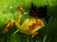 Пролетно утро; comments:4