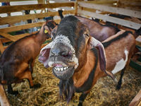 Добро утро и усмихнат ден ми пожела един козел; comments:13