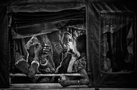 Случки в рикшата; comments:10