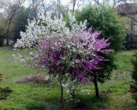 Трицветно пролетно пробуждане.; No comments