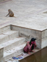 The woman and the monkey - India 2018; comments:4