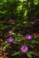 no name ( ID=2150979 ); comments:3