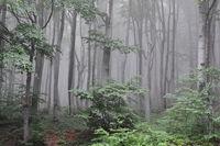 Разходка в гората; comments:8