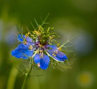 no name ( ID=2151206 ); comments:3