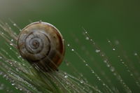 Snail; comments:2