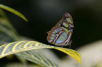 no name ( ID=2151760 ); comments:10