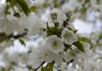 Пролет; No comments
