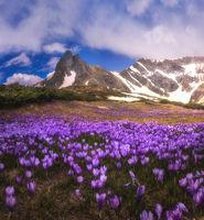 Пролетта се пробужда в Рила; comments:3