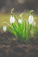 Пролетно пробуждане; comments:1