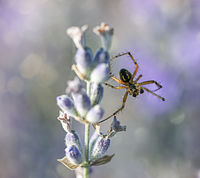 no name ( ID=2157158 ); comments:2