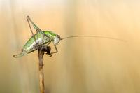 Grasshopper; comments:6