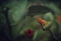 no name ( ID=2161754 ); comments:31