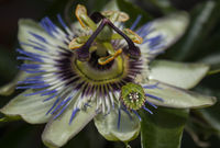 no name ( ID=2162035 ); comments:5