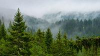 Когато мъглата започне да се вдига.; comments:1