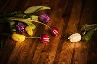 Il était une fois des tulipes; comments:2