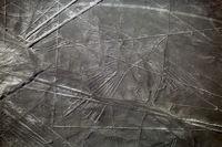 Кондорът, един от знаците на Наска, Перу; comments:3