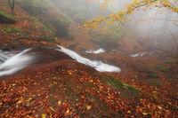 Копренска есенна мистика; comments:8