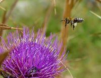 Пчела от Доспат :); comments:4
