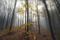 Misty Forest Коментари: 10 Гласували: 43
