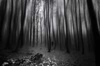 Dark forest; comments:8