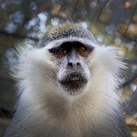 Monkey; comments:1