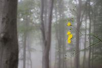 Жълто; comments:7