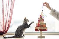 Коледа!; comments:4