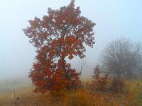 Есенно; comments:7