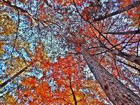 Есенна красота; comments:9