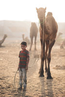 boy with camel; comments:8