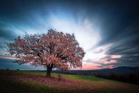 Закъснялата есен в Странджа; comments:6