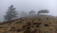 Вятър и мъгла; comments:2