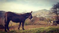 Някъде по Родопа планина; comments:8