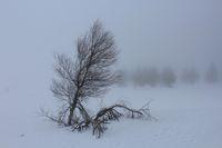 В мъглата; comments:13