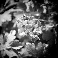Flying flowers / Летящи цветя; comments:7