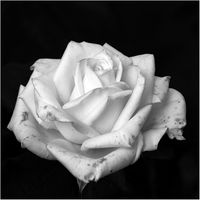 Revelations poetic / Поетични откровения; comments:2