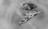 Ефекта на пеперудата:); comments:5