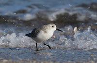 Бягащият пред вълните; comments:7