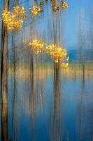 Златна есен; comments:26