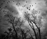 Птиците; comments:11