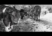 - Извинявай, ама ти какво животно си?!; comments:8