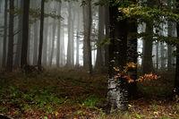 Есенно; comments:5