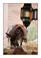 Марко от Мароко; comments:6