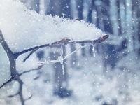 Замръзване...; comments:17