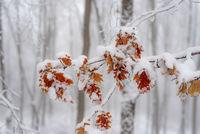 Есенни багри в зимен ден; comments:11