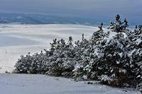 Снежна разходка; comments:1