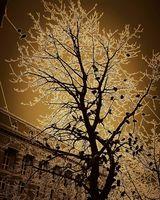дървото с гълъби; comments:4